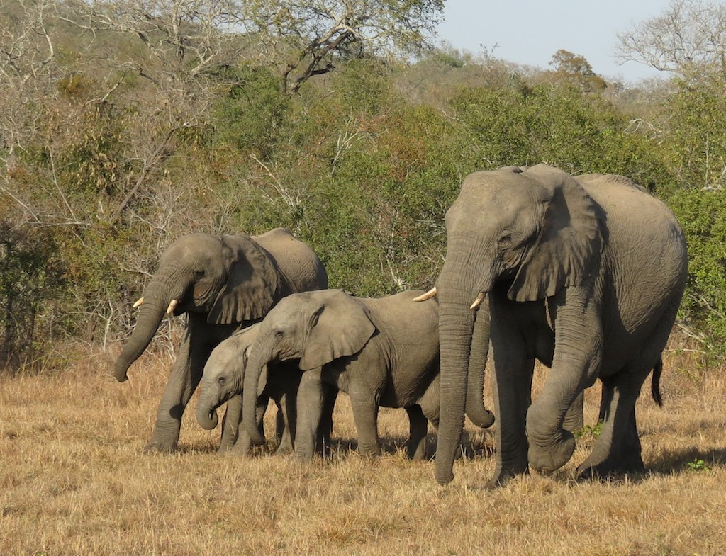 An elephant family in the Kruger area