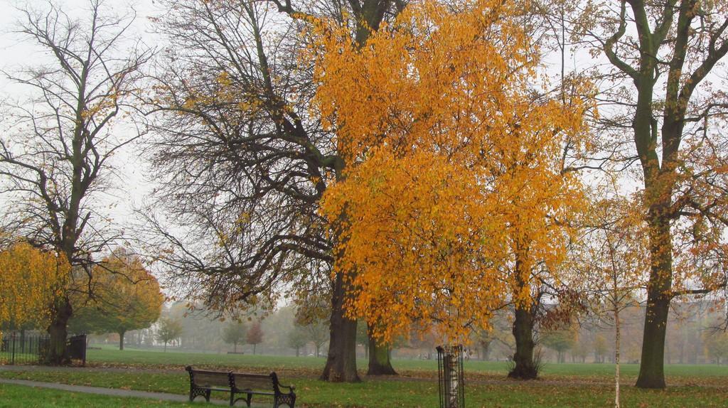 Clissold Park, Hackney |© David Holt/Flickr
