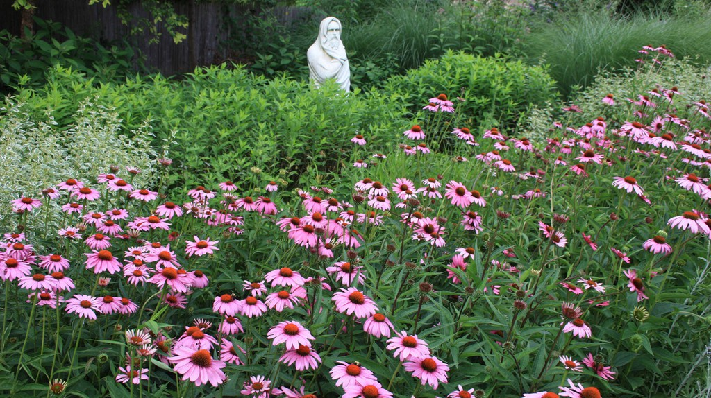 Linwood Park Flowers | © Montgomery County/Flickr