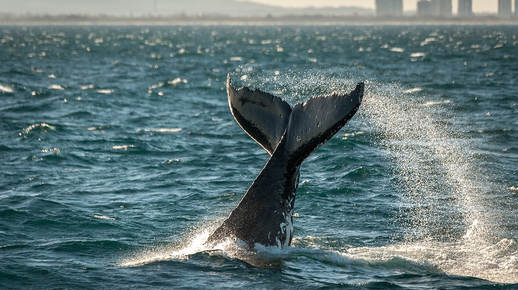 whale one © James Niland/Flickr