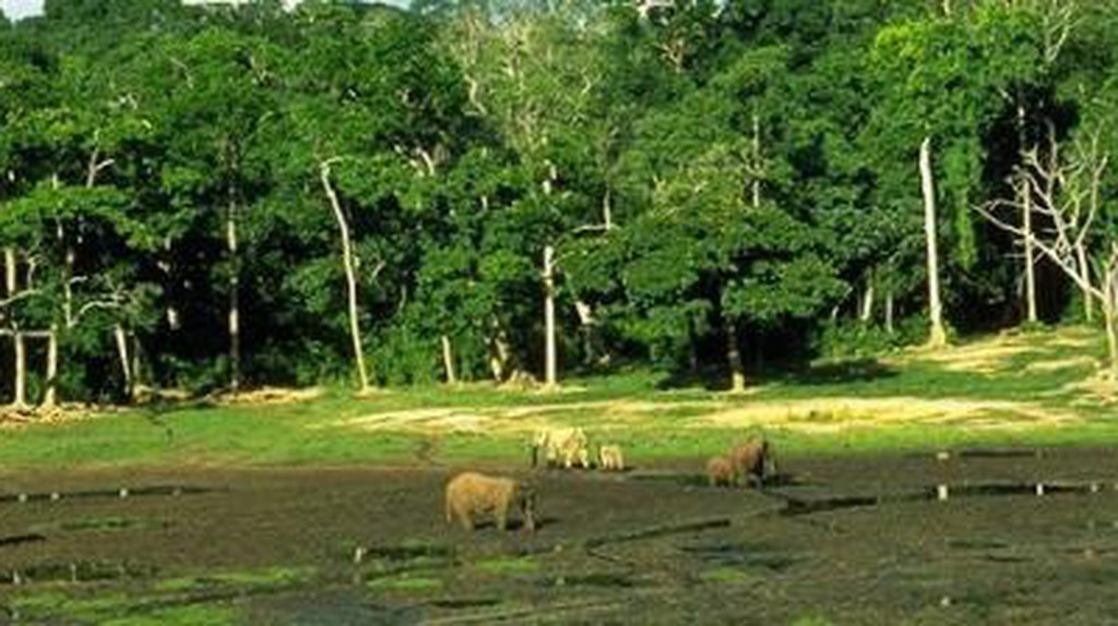 Jungle Brigade Goes Into Action In Gabon