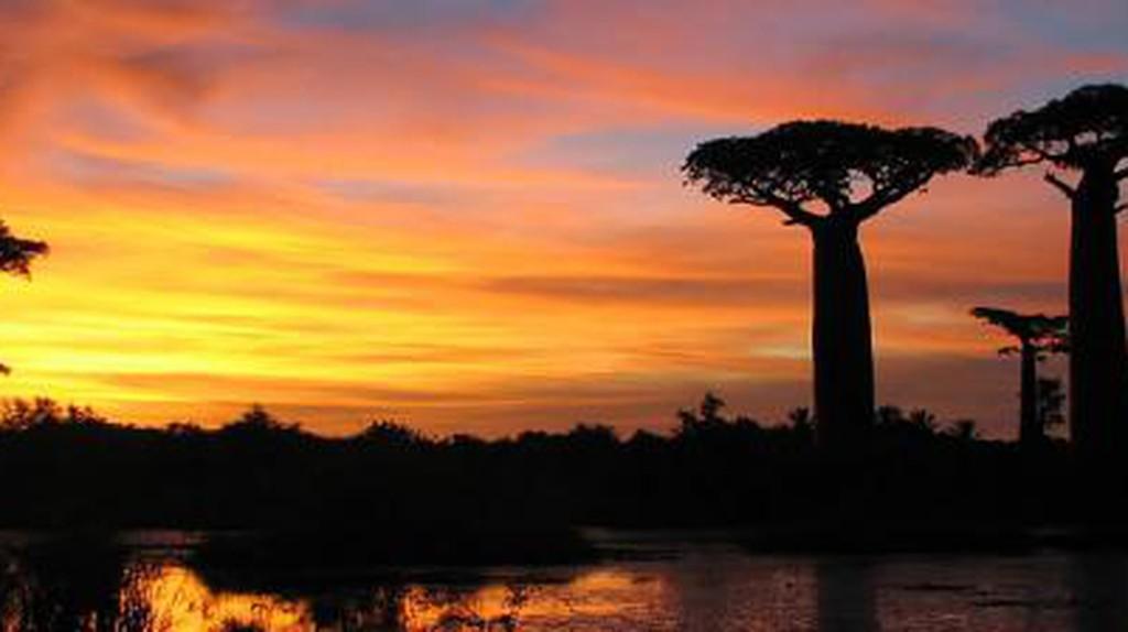 Ephemeral Eden: How Eco-Tourism Could Save Madagascar