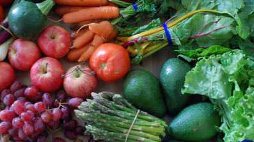 The Best Vegetarian Restaurants in Ottawa, Canada