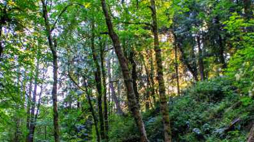 The Best Parks In Portland, Oregon