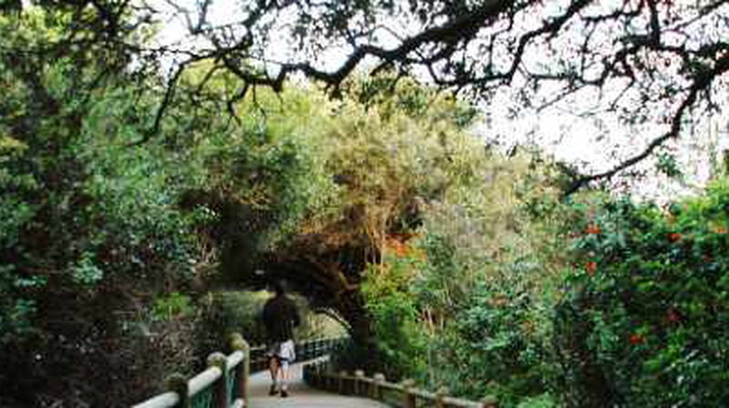 The Best Parks in Cape Town, South Africa