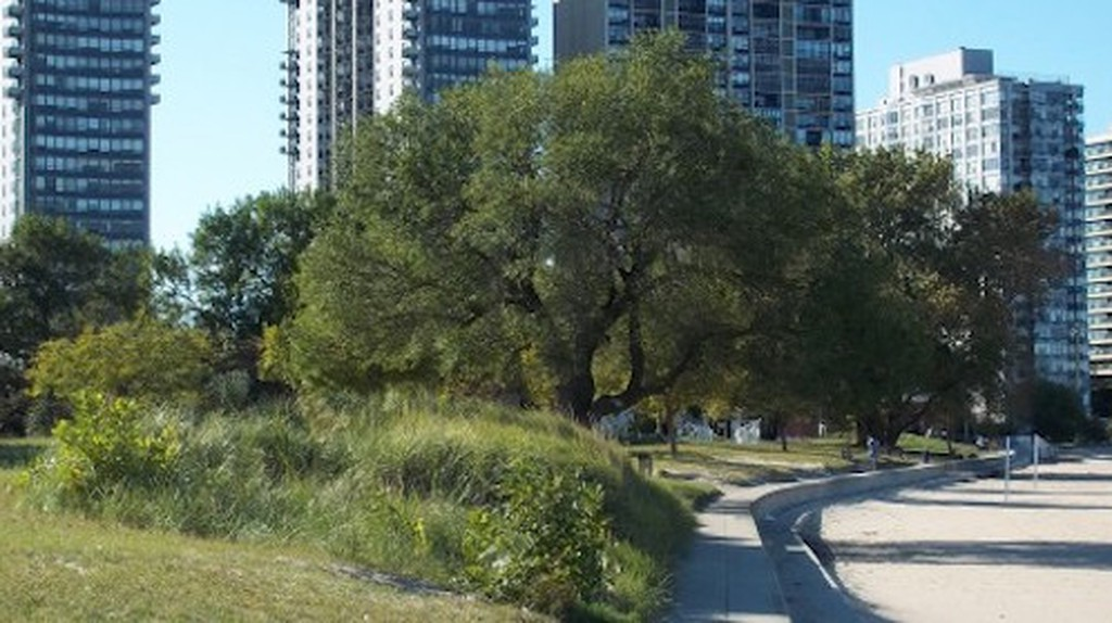 Top 10 Things To Do And See In Edgewater, Chicago