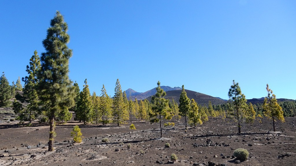 Surreal scenes in Teide National Park © Kirsten Henton