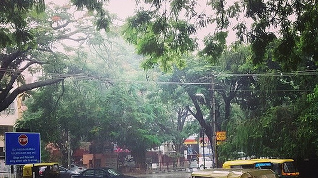 The tree-lined avanues of Indiranagar 100 ft Road (Photo: Kiran Ravikumar/Flickr)