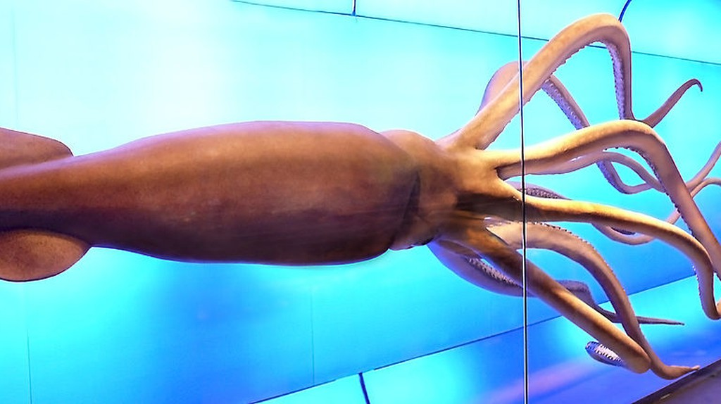 The History Of Madrid's Natural Science Museum In 1 Minute