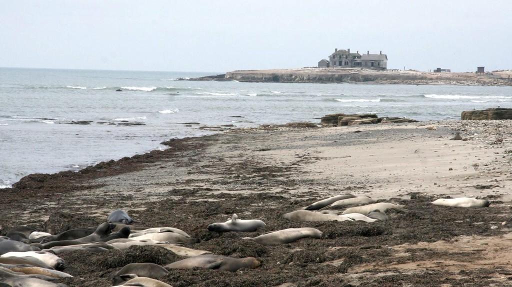 Sea Lions in Half Moon Bay © Travis Wise/Flickr
