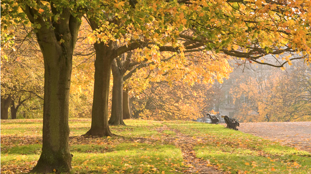 The Broad Walk | Courtesy of The Royal Parks