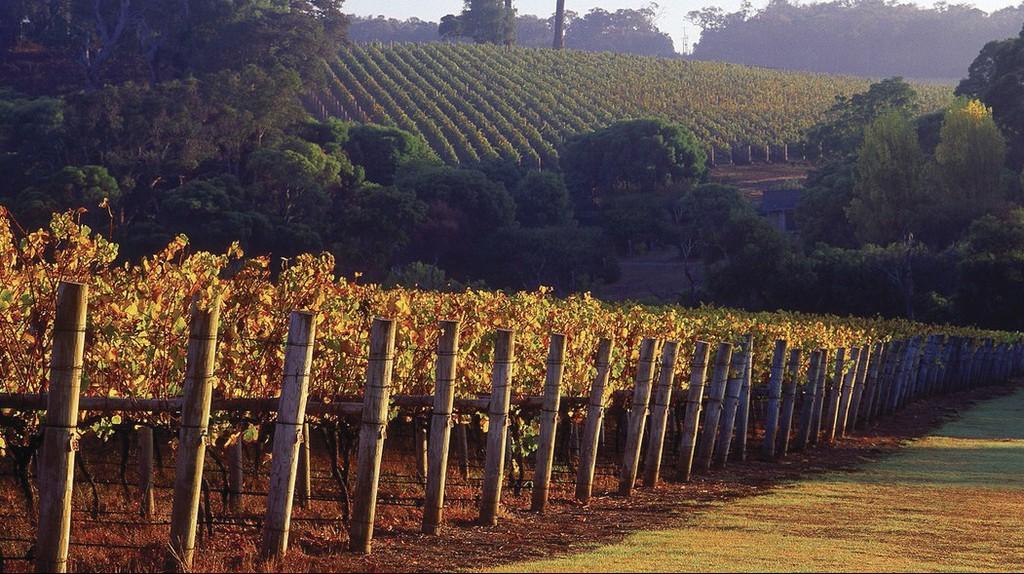 Winery, Margaret River, WA   Courtesy of Cape Lodge
