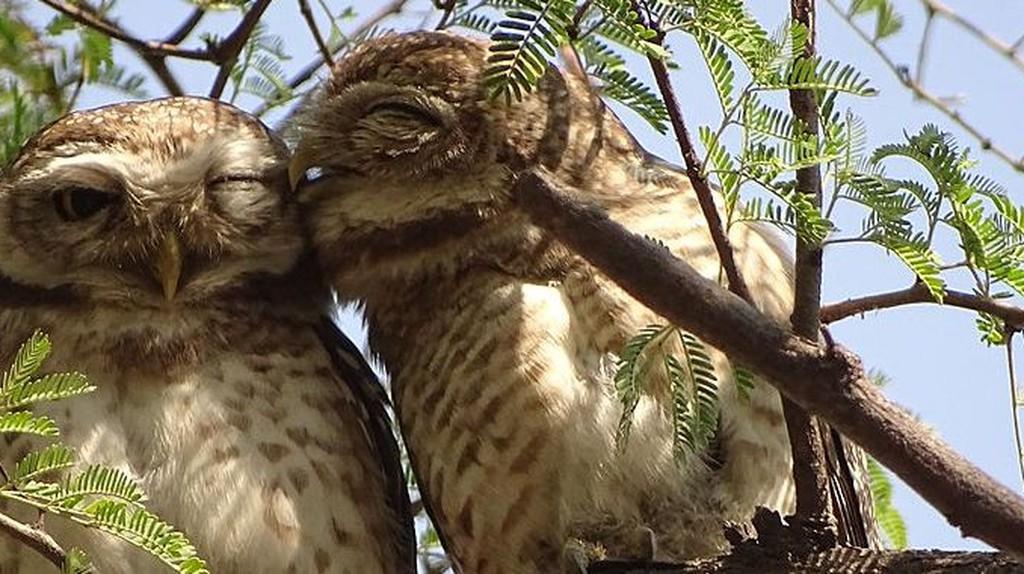 Keoladeo National Park (Bharatpur Bird Sanctuary)   ©  Abhirup26/WikiCommons