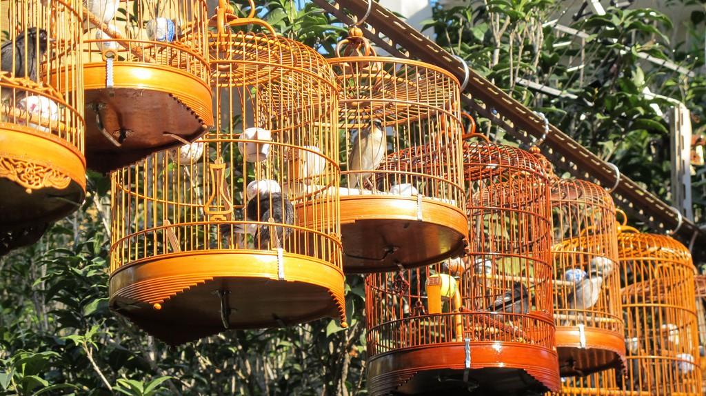 Bird market | © Gavin Anderson / Flickr
