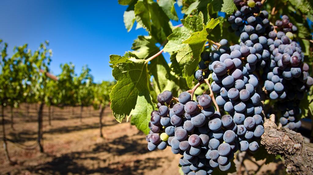 Vineyard   ©  (matt)/Flickr