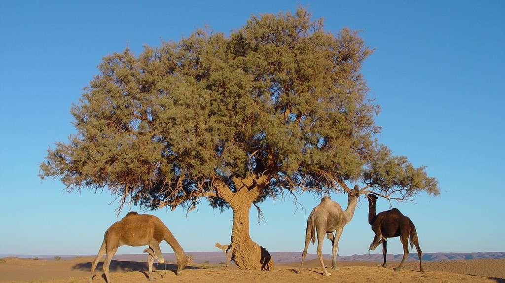 Morocco / © Pixabay