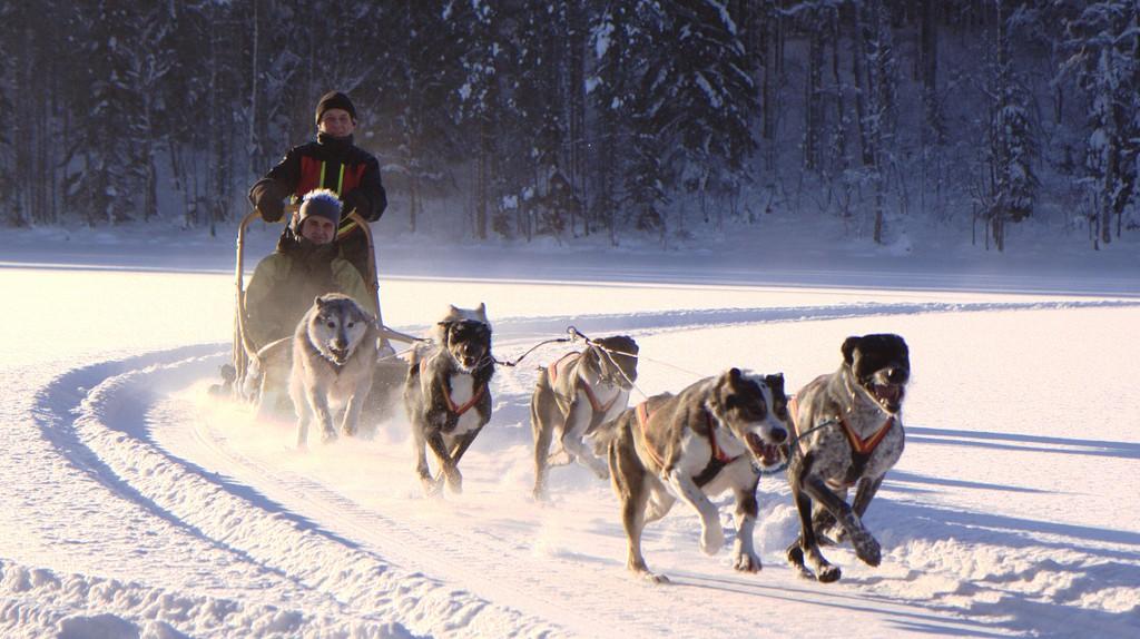Husky dogs running | © Visit Lakeland/Flickr