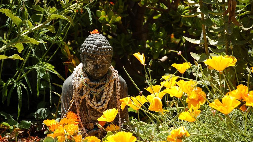 Zen in Madrid  | © Brad Coy/Flickr