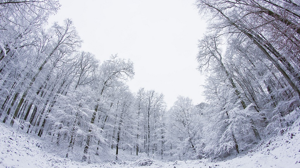 The Sonian Forest in wintertime | © Didier Weemaels / Flickr