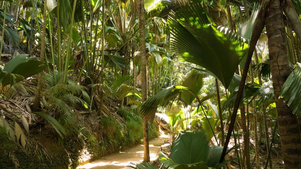 vallee de mai   ©so seychelles/ flickr