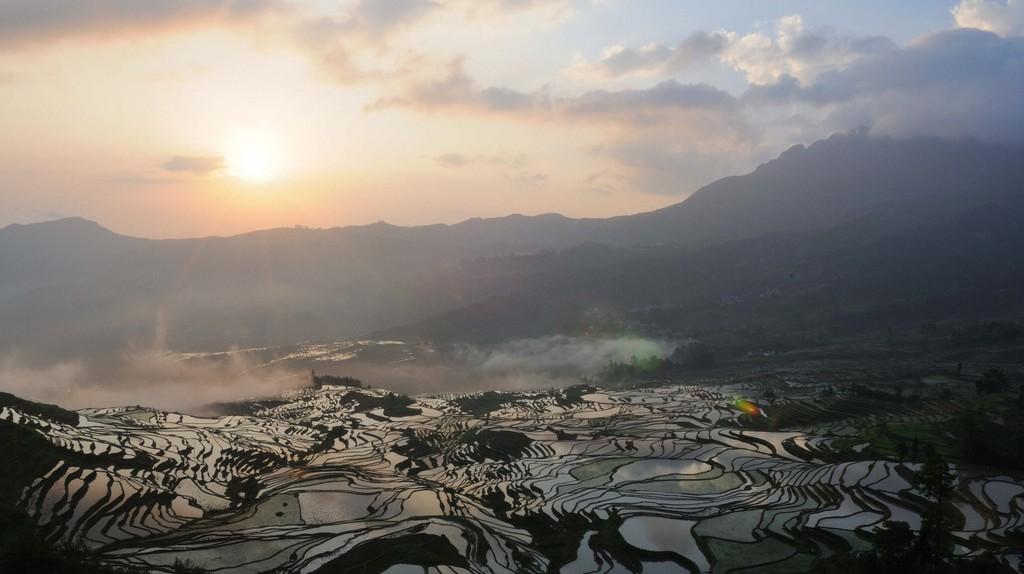 Rice |©M M/Flickr