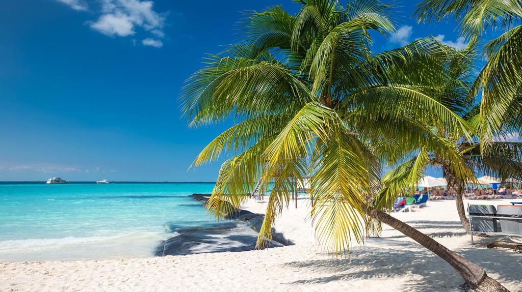 Coconut palm on caribbean beach, Cancun, Mexico | ©  photopixel/Shutterstock