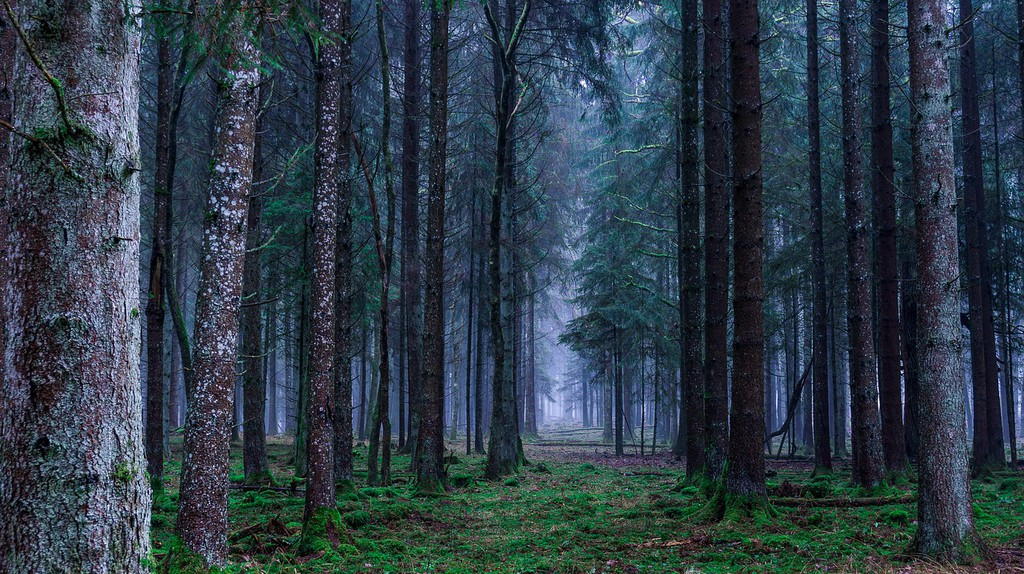 The forest is calling   © Flo222/Pixabay