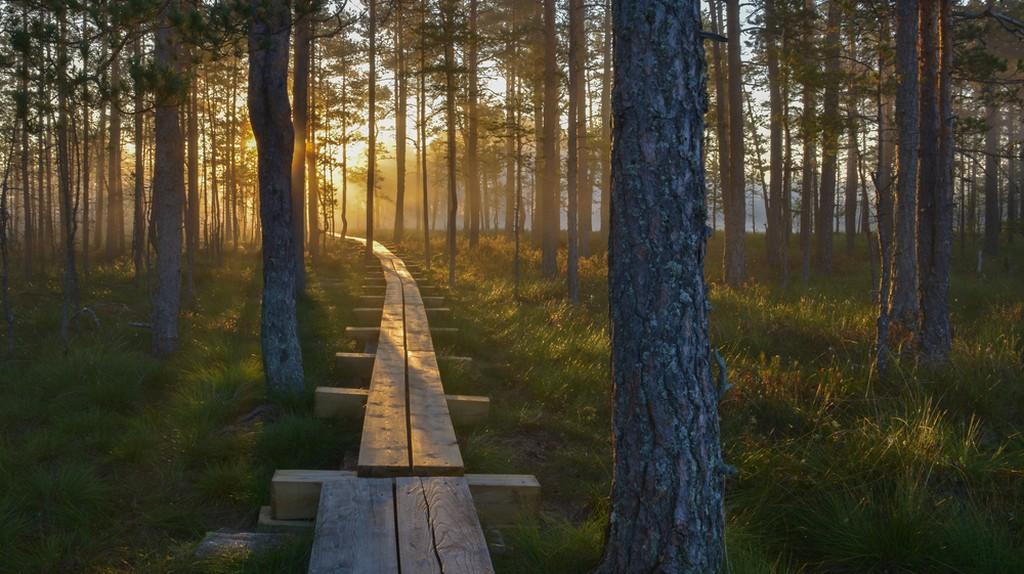 Lahemaa National Park| © UrmasHaljaste/Shutterstock