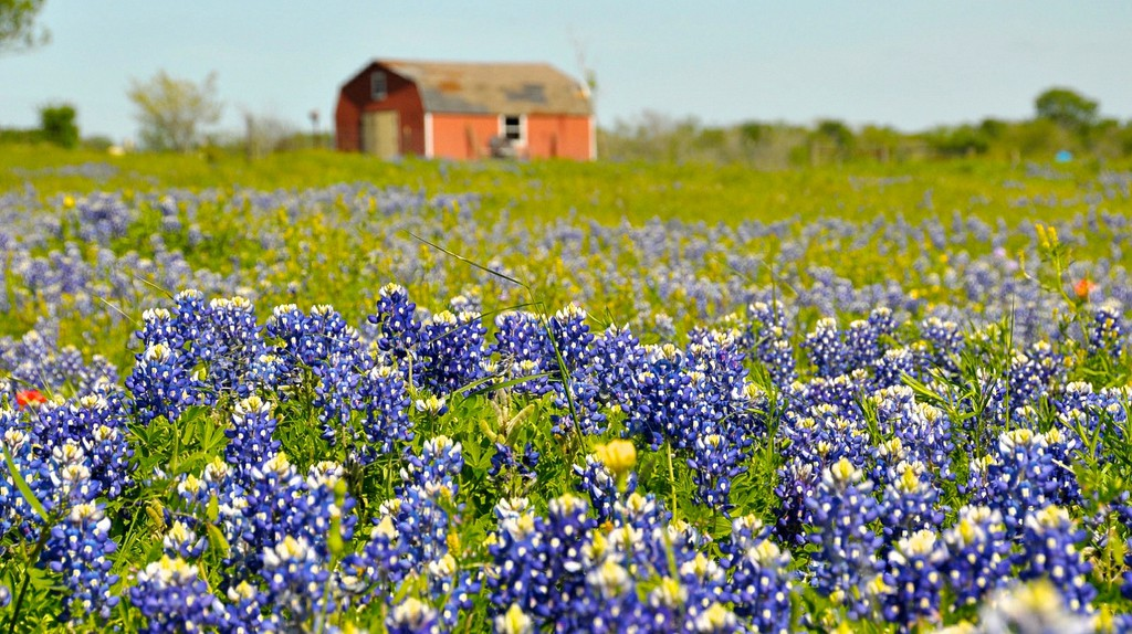 Texas Wildflowers | ©  faungg's photos / Flickr