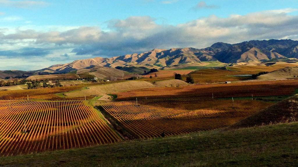Marlborough Landscape   © Bernard Spragg/Flickr