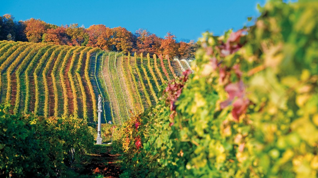 Vineyard in Vienna