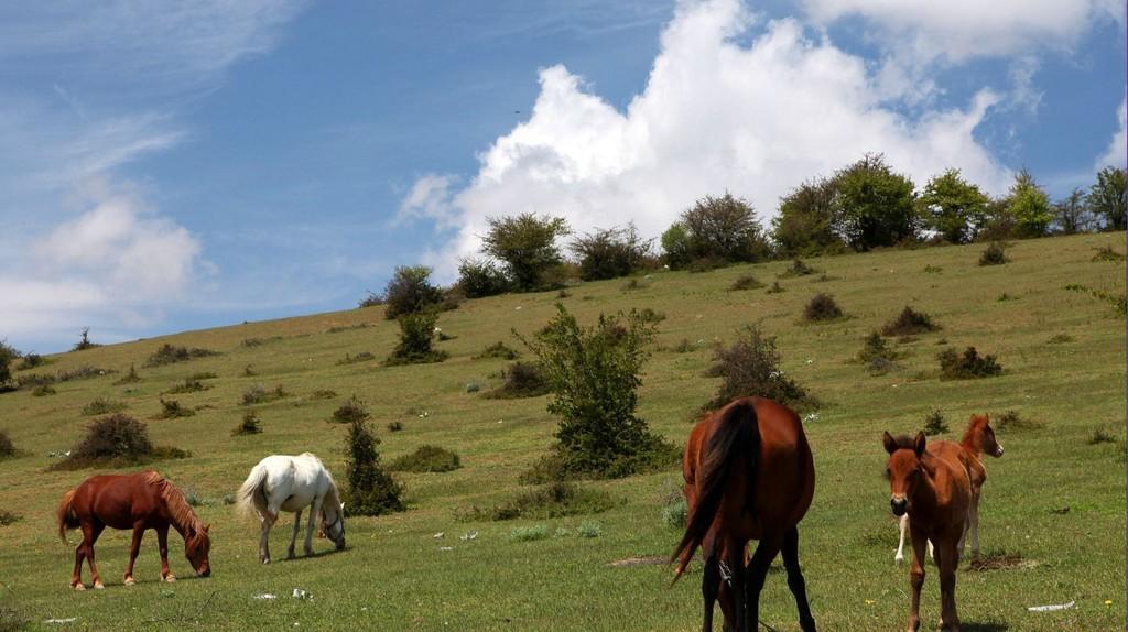Nature in the Mazandaran province   © NInara / Flickr
