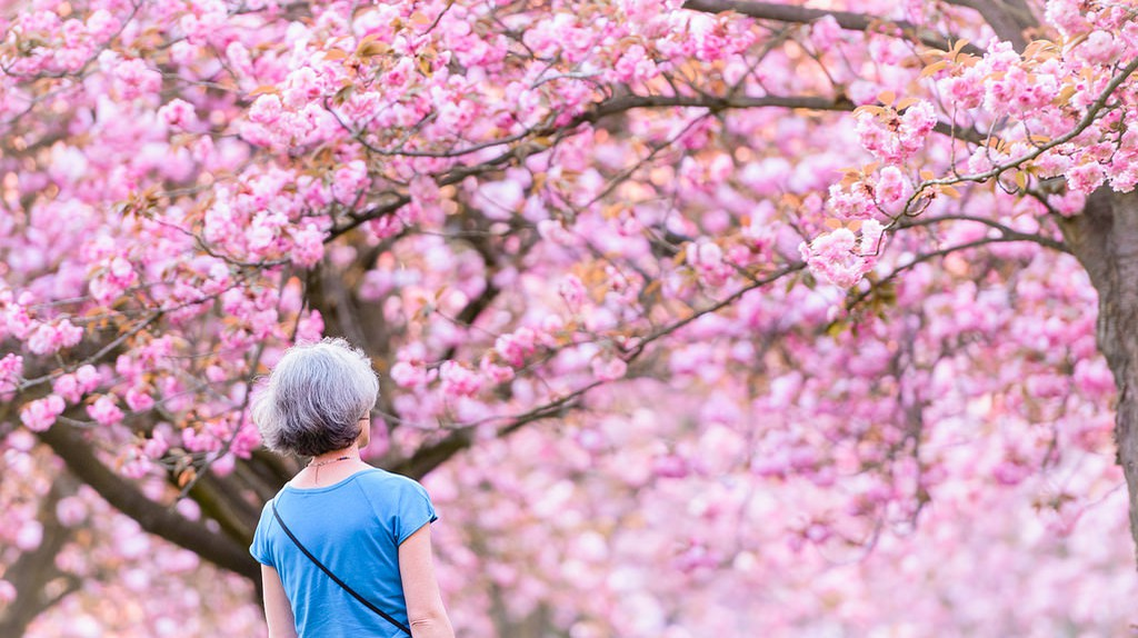 Cherry blossoms at the Parc de Sceaux │© Clement RG / Flickr