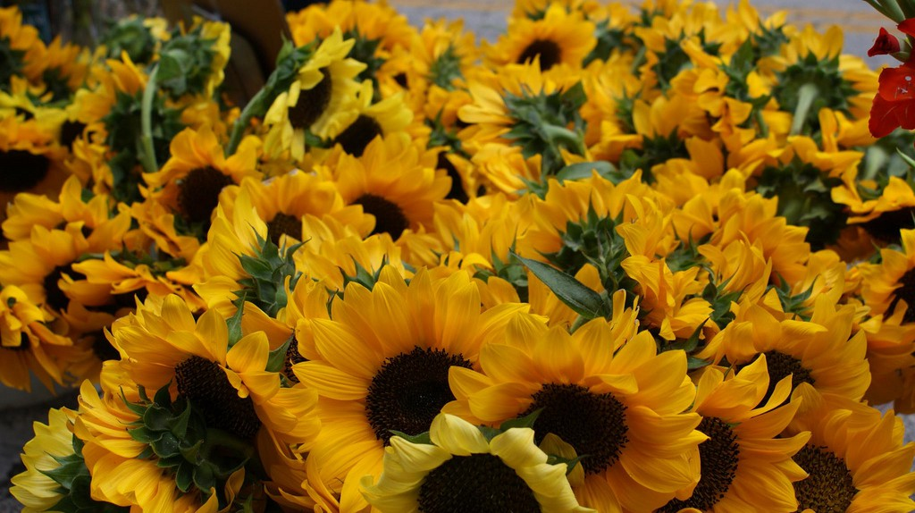 Fresh flowers at the farmer's market | © Gemma Billings / Flickr