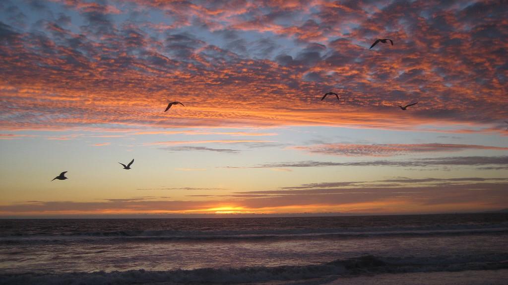 Venice Beach|©Annie Mole/Flickr