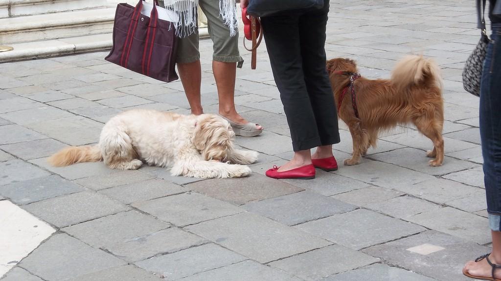 Venetian dogs | lauren_j/Flickr