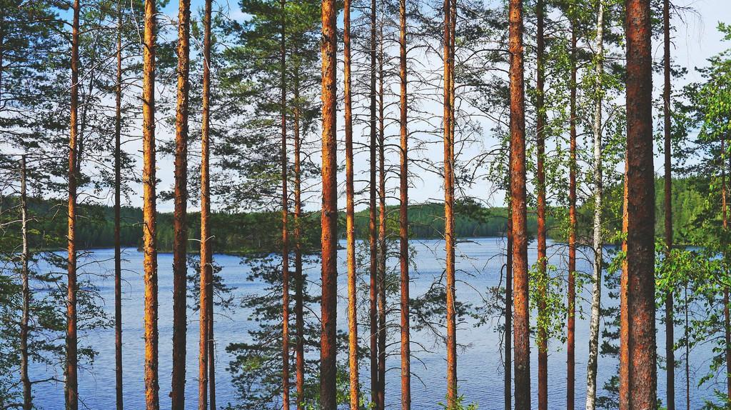 Finnish lakeside |© Public domain / Pixabay