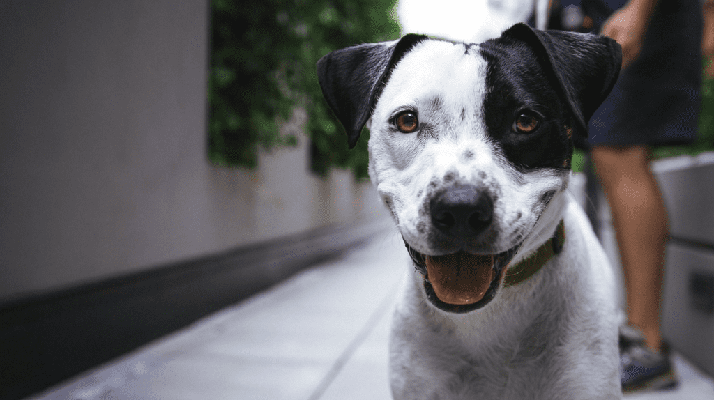 Johannesburg has a wide range of pet-friendly restaurants to suit the needs of every pet owner |© Justin Veenema / Unsplash