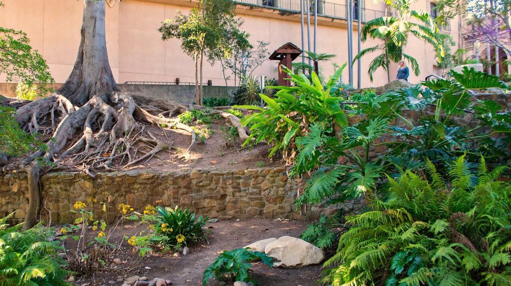 "<a href=""https://www.flickr.com/photos/plantpostings/29506525794/"" target=""_blank"" rel=""noopener noreferrer"">Zoro Garden   PlantPostings / Flickr</a>"