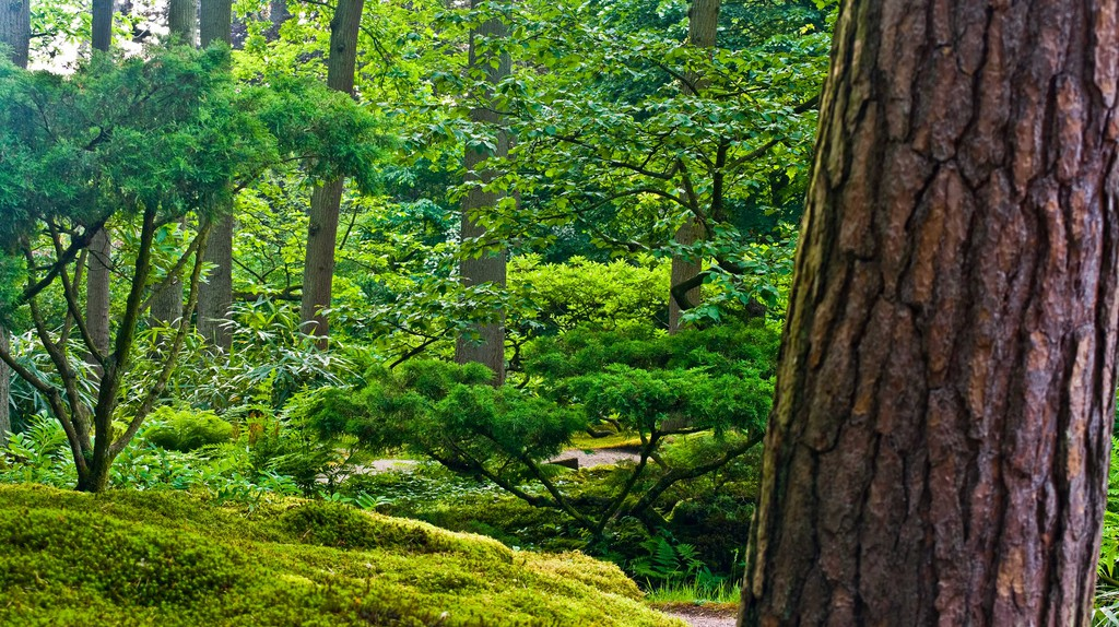 The Japanese Garden | ©  Marja van Bochove / Flickr