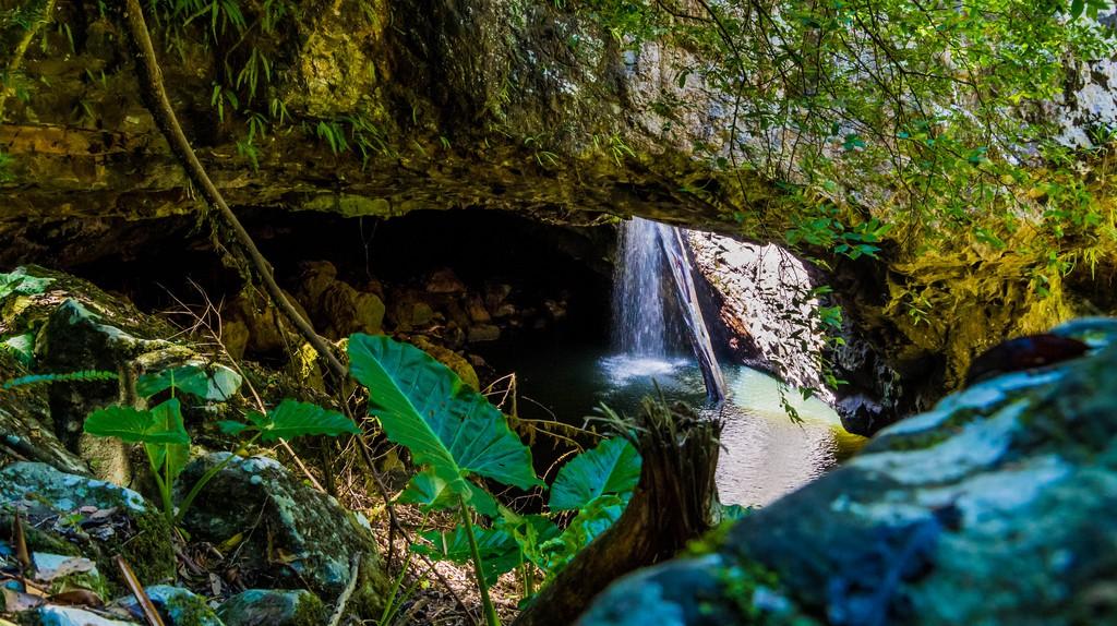 Springbrook National Park  | © Josselin Berger/Flickr