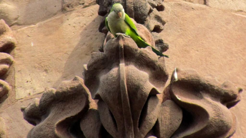Green Parrot - Green-Wood Cemetery, Brooklyn | © David Berkowitz/Flickr