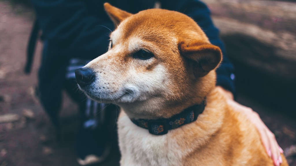 5 Reasons You Should Get a Dog For the Sake of Your Health