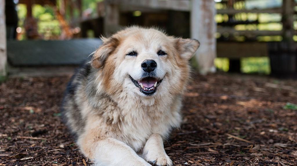 All dogs deserve a family ©Matt Chan/Flickr