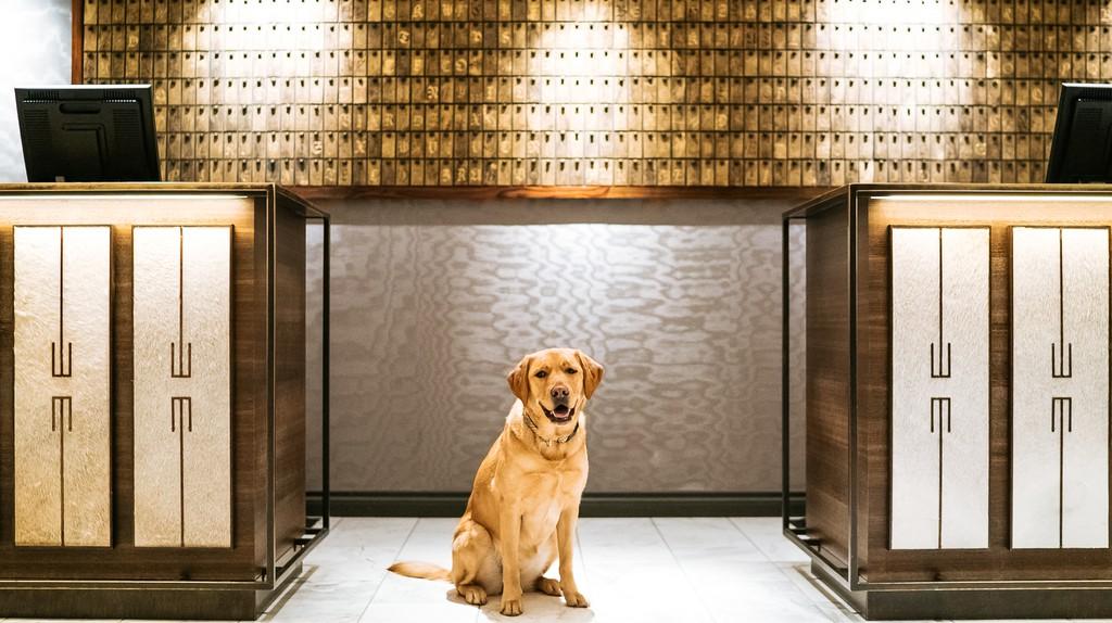 The Fairmont's Canine Ambassador, Ella   © Fairmont Hotels Vancouver