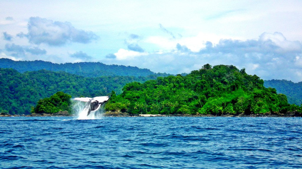 Whale-watching in the Colombian Pacific | © Chris Bell