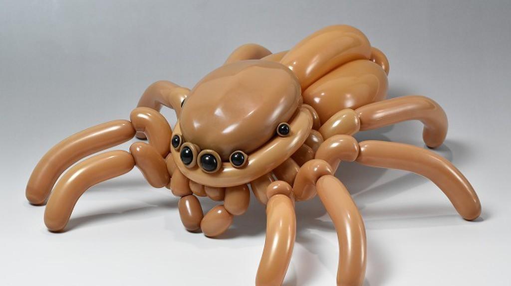 Jumping spider |Courtesy of Masayoshi Matsumoto