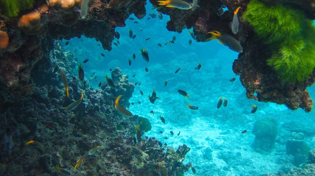 Andaman sea marine life | © Phuket@photographer.net / Flickr