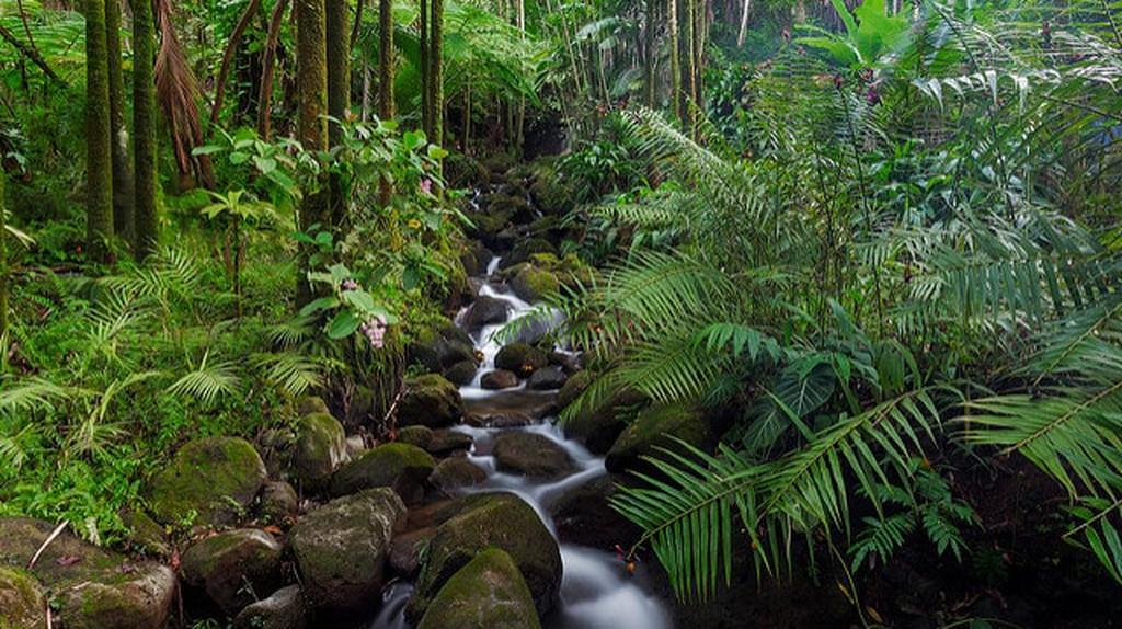 Rainforest | ©jar/Flickr