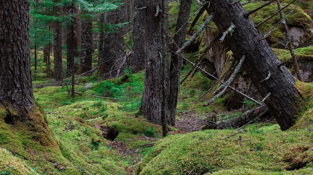 Mossy Forest in Cameron Highlands © jar []/Flickr